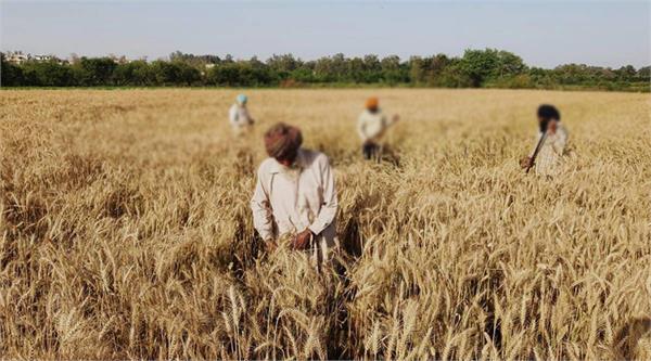 sheller owners boycott paddy season