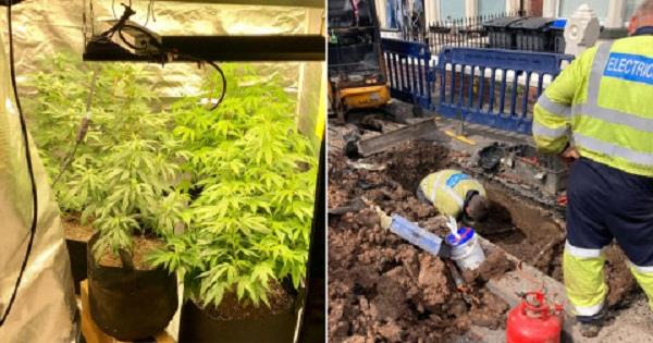 uk  about 200 homes cut off due to cannabis cultivation