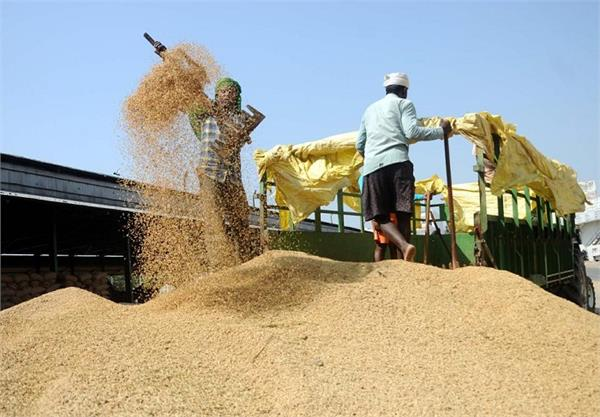 amritsar rice millers association  milling policy  boycott