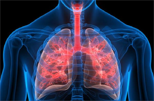 health tips  lungs  infections  eating  fruits  guava papaya