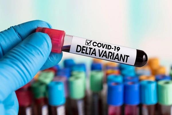 new zealand reports 14 new community cases of covid 19 delta variant